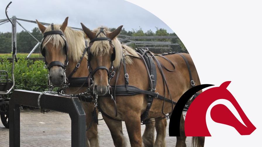 accomodatie - poetsplaats - vdb stables