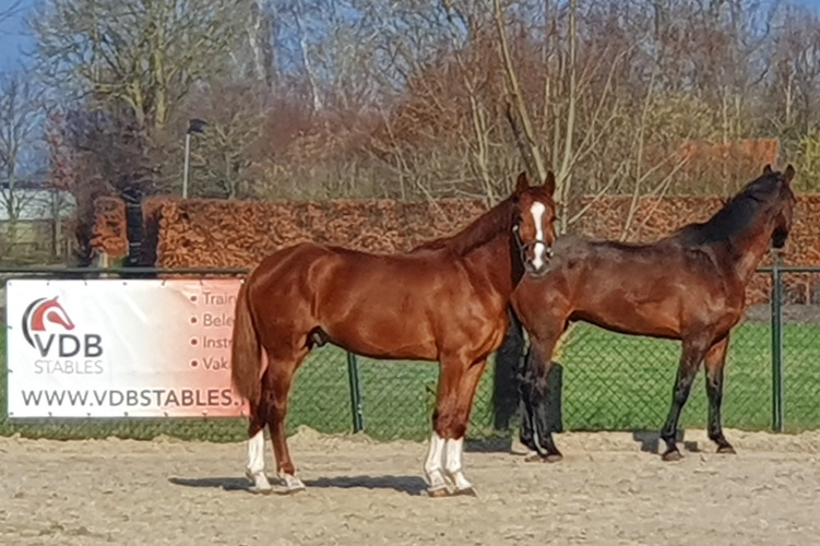 welkom Maxwell - VDB Stables